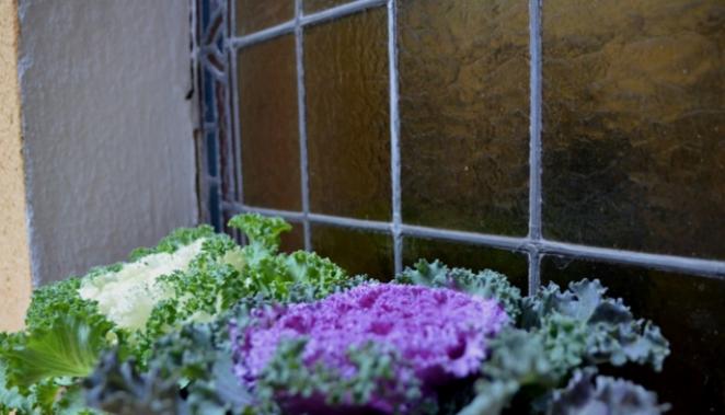 Ablak virág