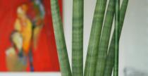Irodai növény