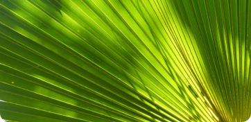 Növénydekoráció
