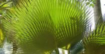 Kerti növény