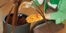 Növény átültetés