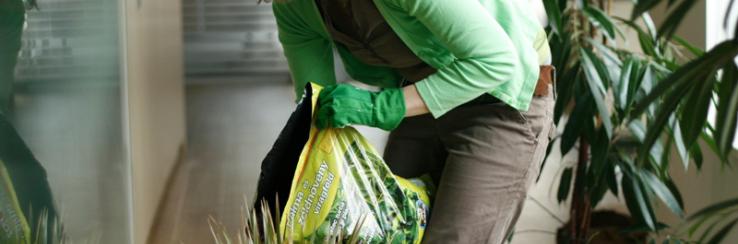 Növény karbantartás
